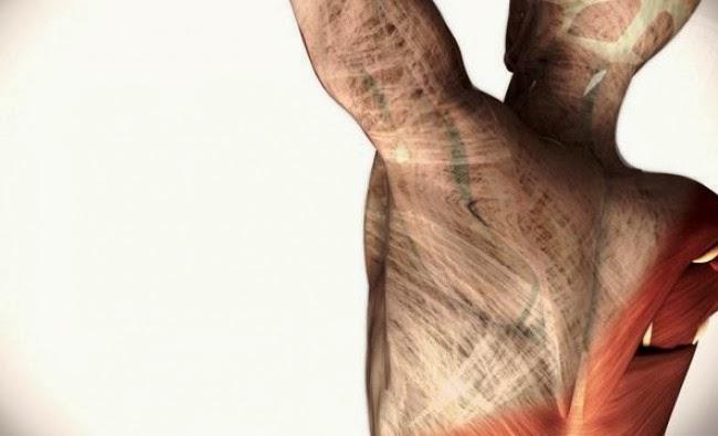 Que es la Fascia y cual es su papel en las lesiones musculo-esqueléticos